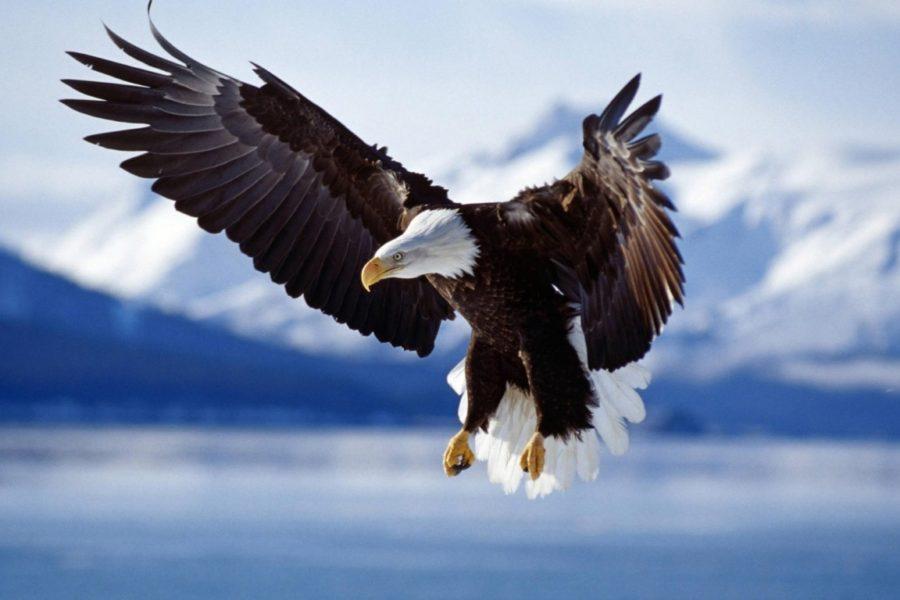 Obiettivo autostima per volare alto