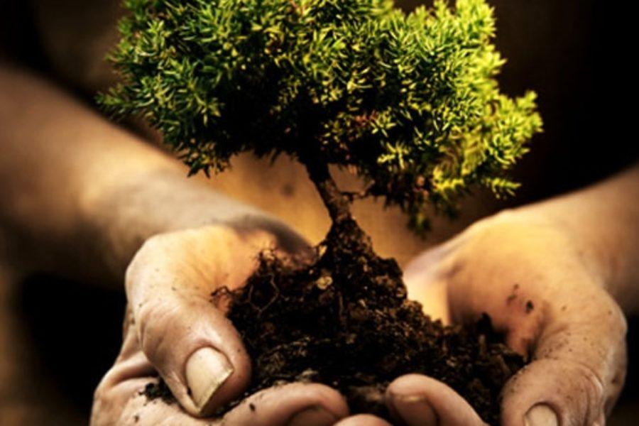 In educazione ogni albero produce i suoi frutti